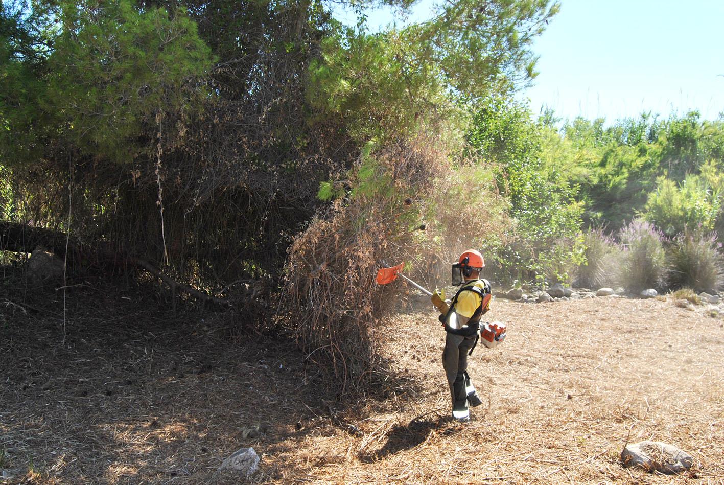La actuación comprende la eliminación de cañar y actuaciones selectivas sobre la vegetación a lo largo de 34.000 m2 de superficie.