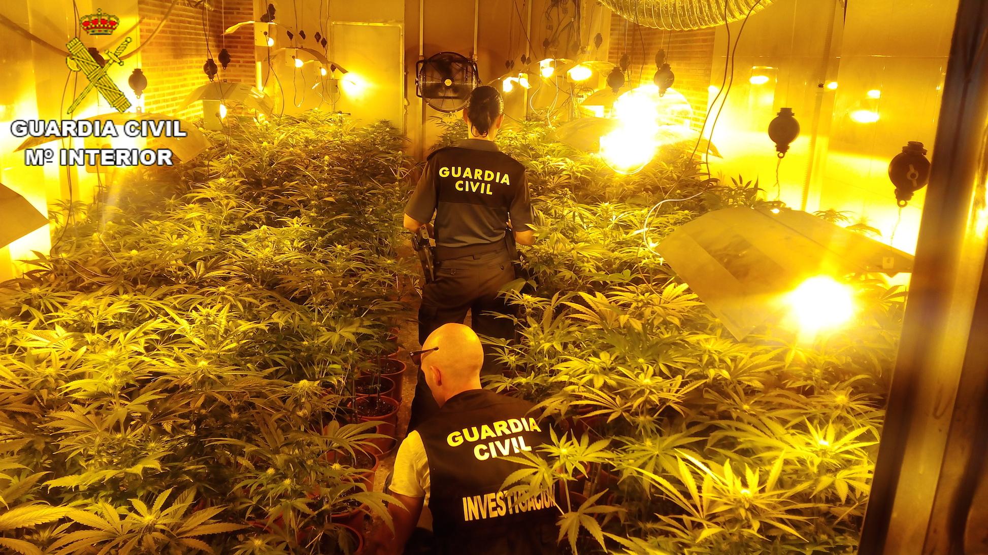 Los agentes con las plantas incautadas en un garaje de Carlet.