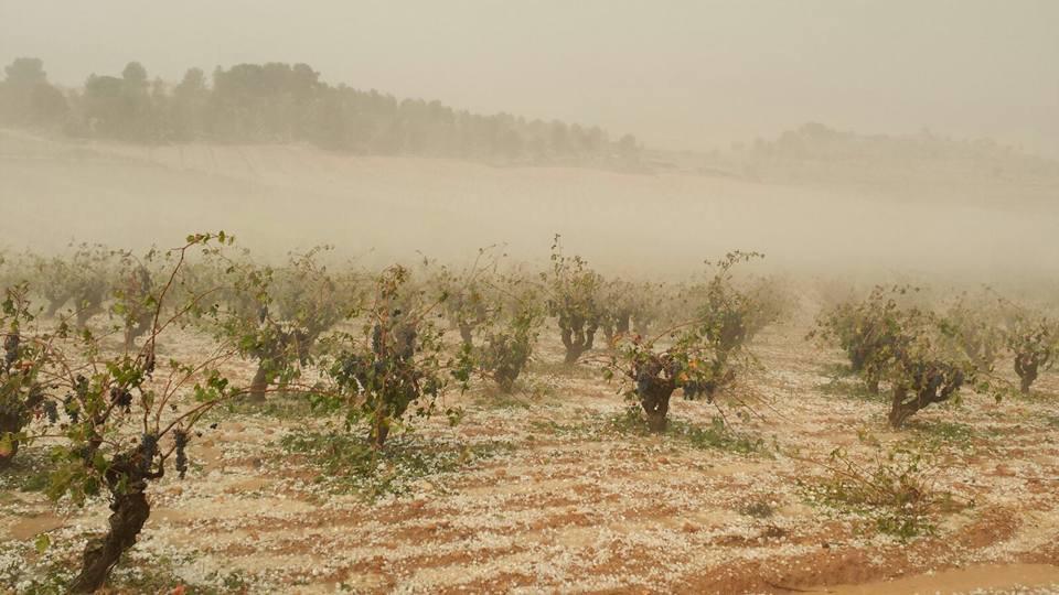 Destrozos producidos en el campo valenciano por el pedrisco.