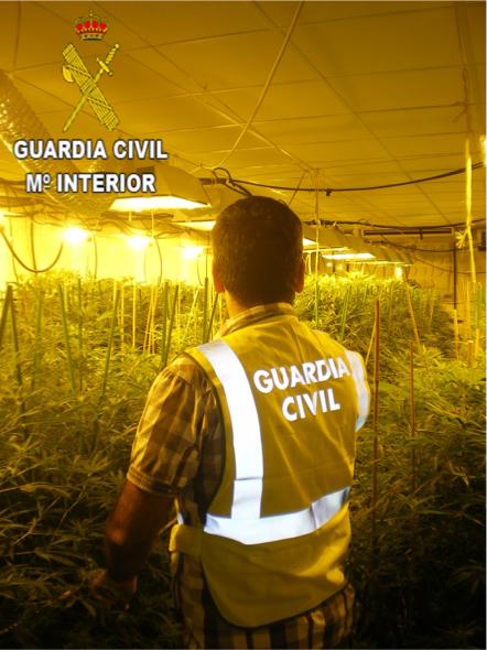 Un agente ante las plantas decomisadas por la Guardia Civil.