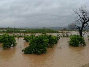 AVA-ASAJA informa de que los cultivos de cítricos y de caquis, así como las infraestructuras agrarias figuran entre los principales perjudicados de las últimas lluvias torrenciales.