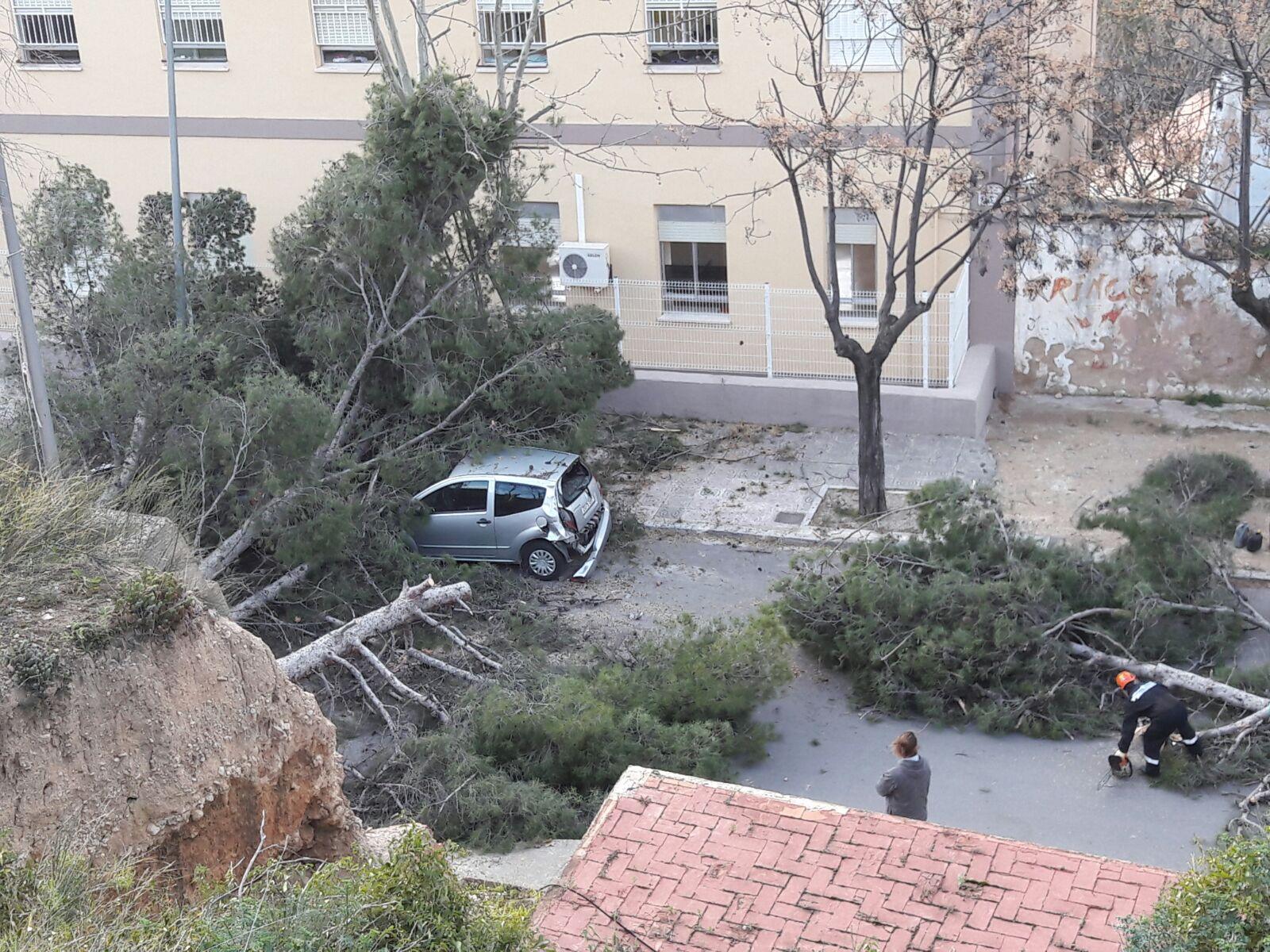 Los árboles caídos en la zona próxima al Paseo de San Luis de Buñol mientras son retirados por los operarios municipales y miembros de Protección Civil.
