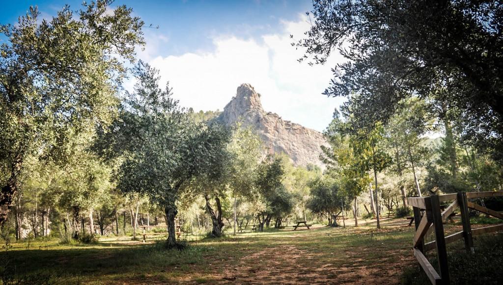 El Institut Valencià de la Joventut (IVAJ), en su apuesta medioambiental, ha organizado para este verano cuatro campos de voluntariado.