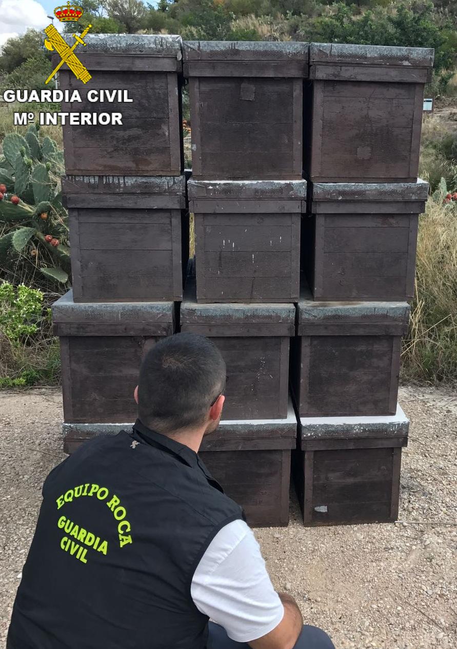 Se aprehendieron 78 colmenas que se encontraban en un asentamiento dentro de una explotación agrícola de la localidades de Genovés y en un almacén de la población de Corberá.