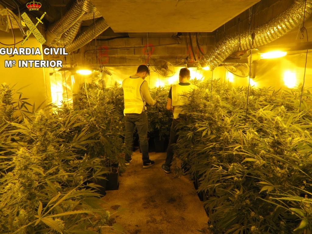 Durante la entrada y registro se halló material para su cultivo de un valor aproximado de 80.000 euros.