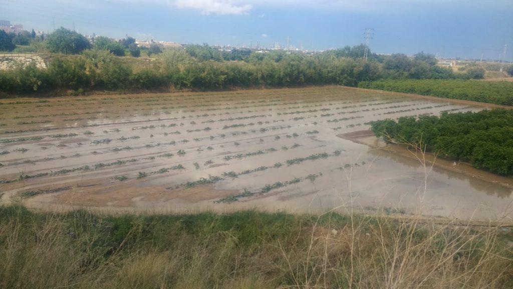 Un campo de calabazas anegado por las fuertes lluvias registradas.