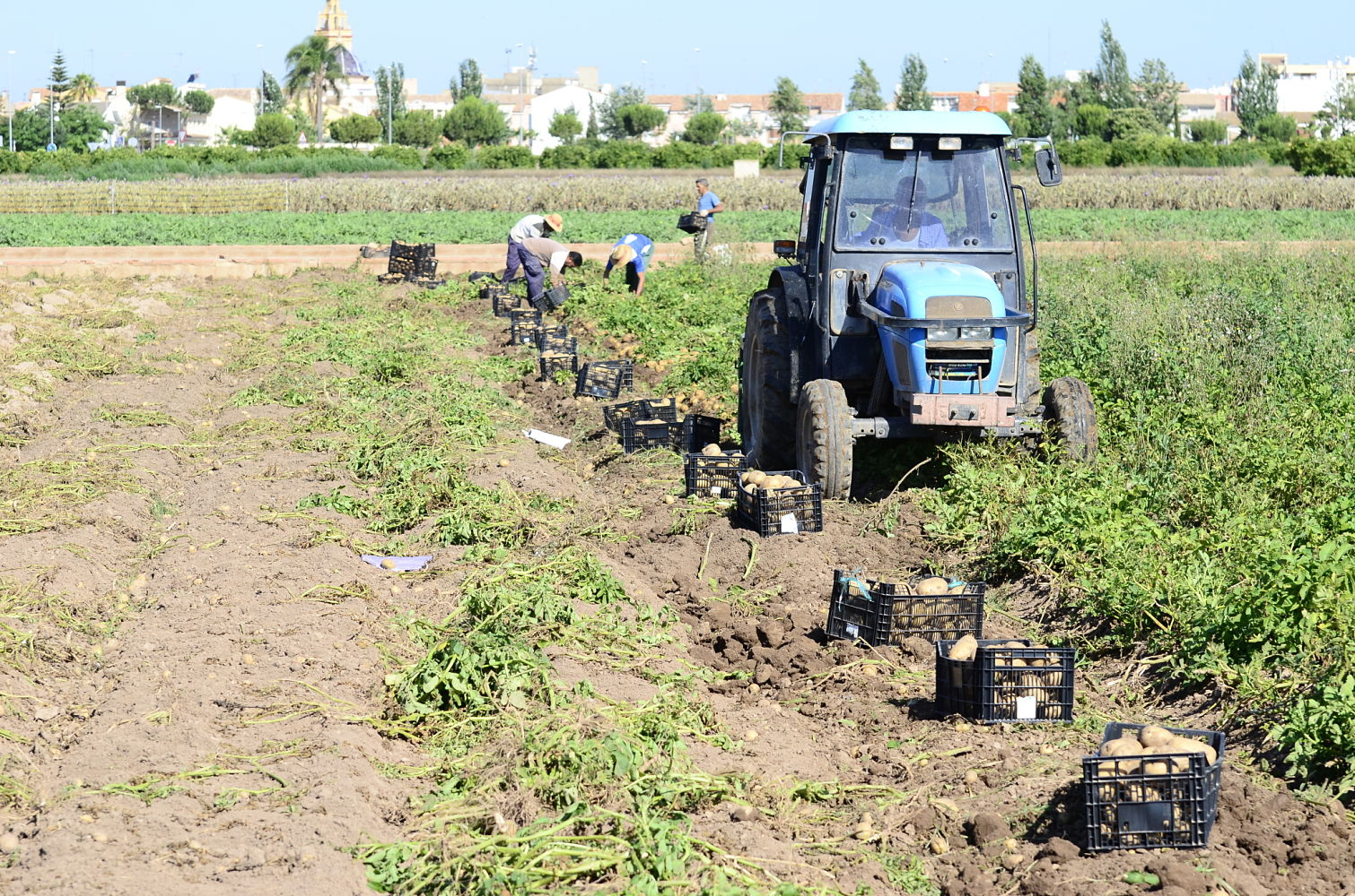 Actualmente está en proceso de redacción y LA UNIÓ ya ha hecho llegar a la Conselleria de Agricultura, de quien depende, sus propuestas detalladas.