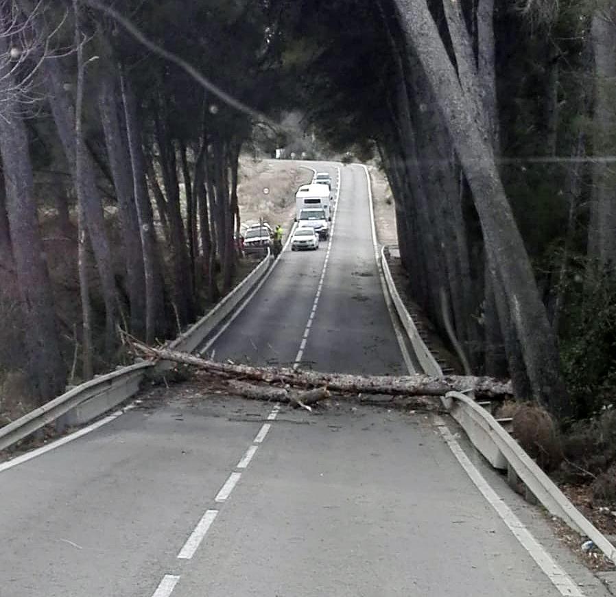 Árbol caído en la carretera entre Alborache y Buñol a consecuencia de los fuertes vientos de esta semana.