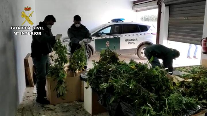 Se han practicado 31 registros en distintas localidades de la Comunidad Valenciana.