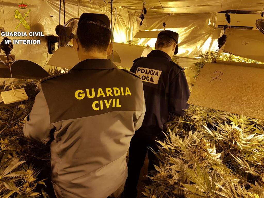 Con esta operación se han incautado 206 plantas de marihuana con un valor en el mercado de alrededor de 300.000 euros.