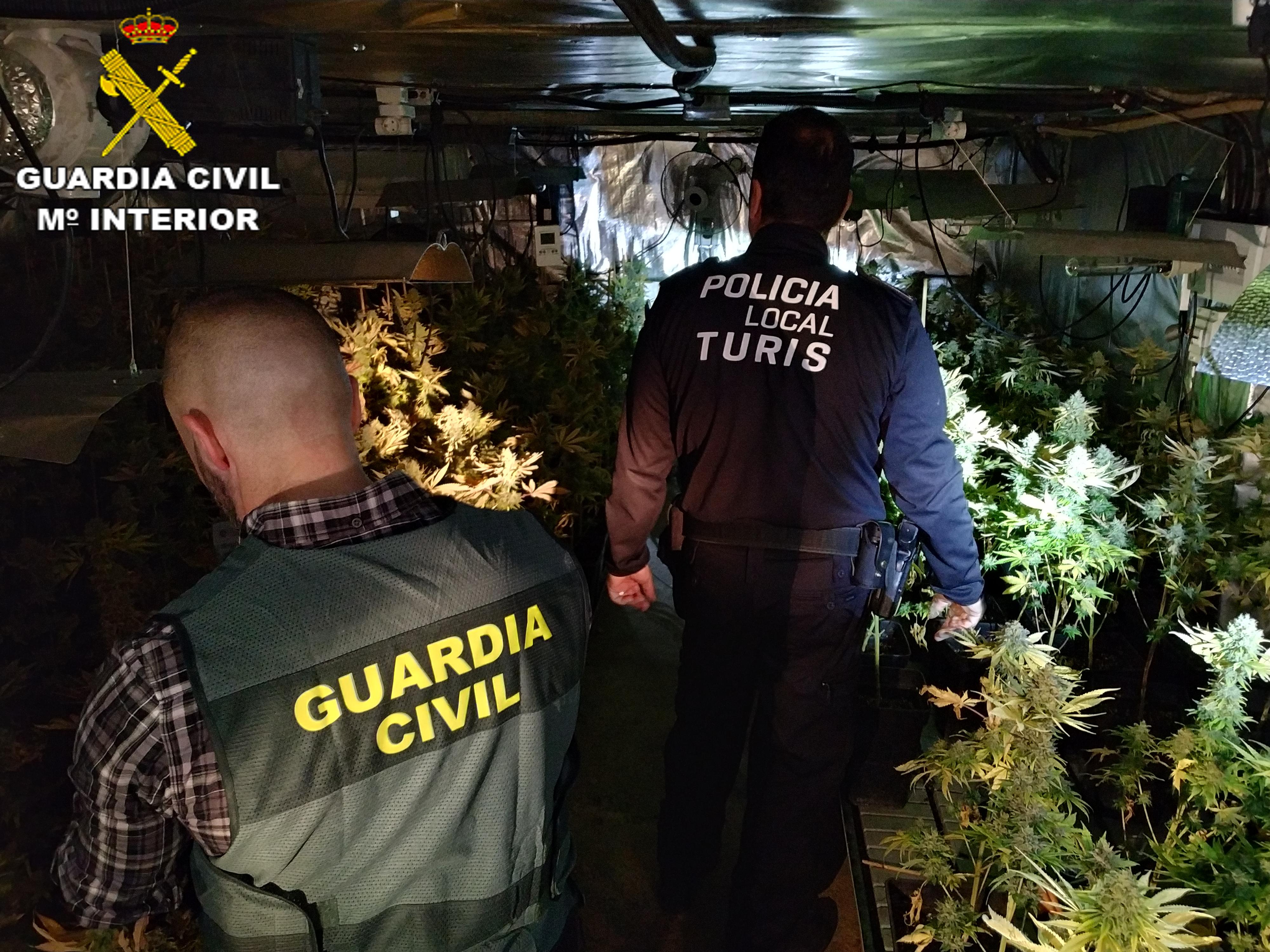 Con esta operación se han incautado 360 plantas de marihuana con un valor en el mercado de alrededor de 105.000 euros.