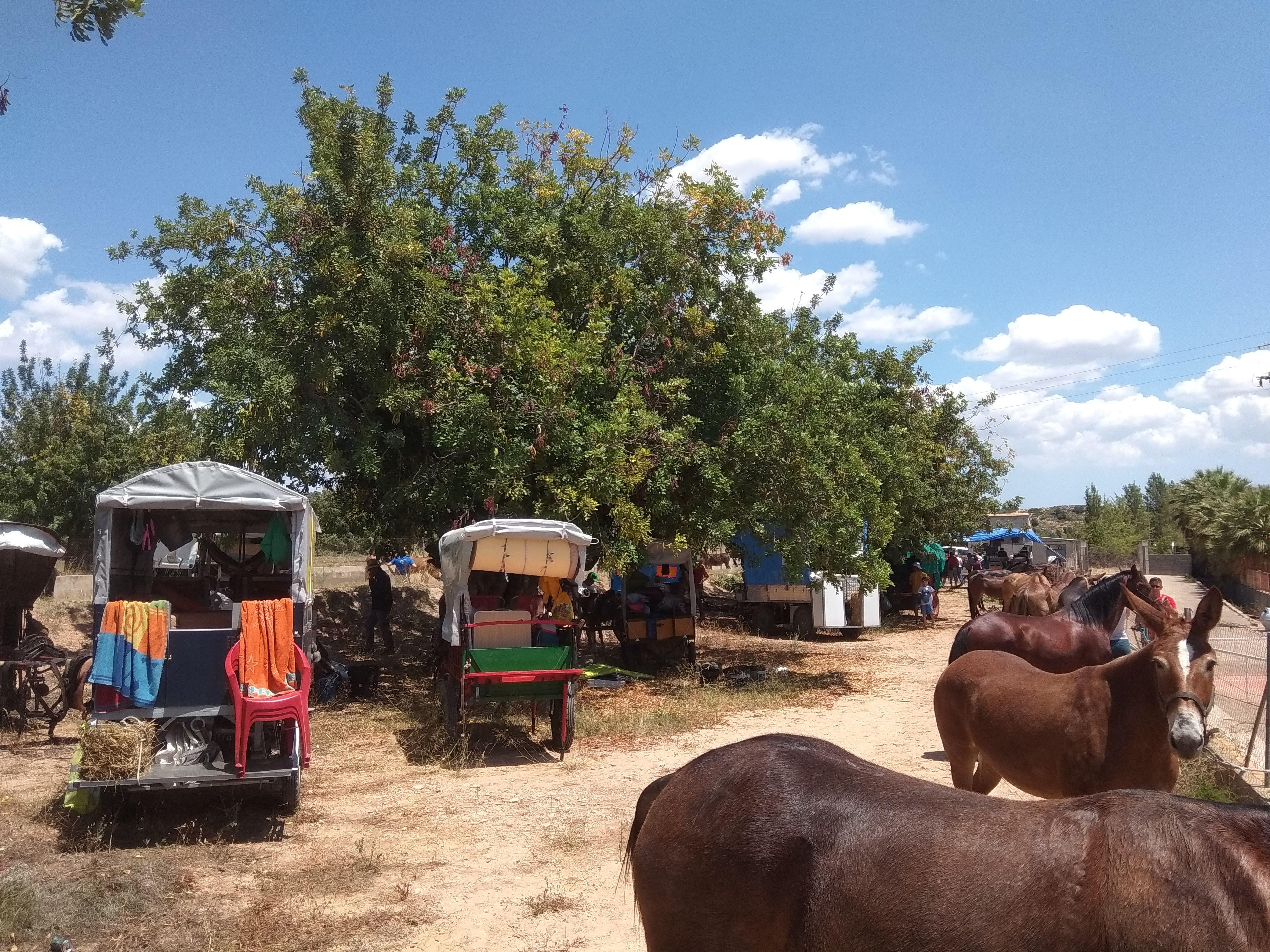 Participants de pobles com Picassent, Ontinyent, Gandia o Aielo de Malferit conviuenestosdies dalt dels seus carros recorrent les carreteres de la nostra comunitat.