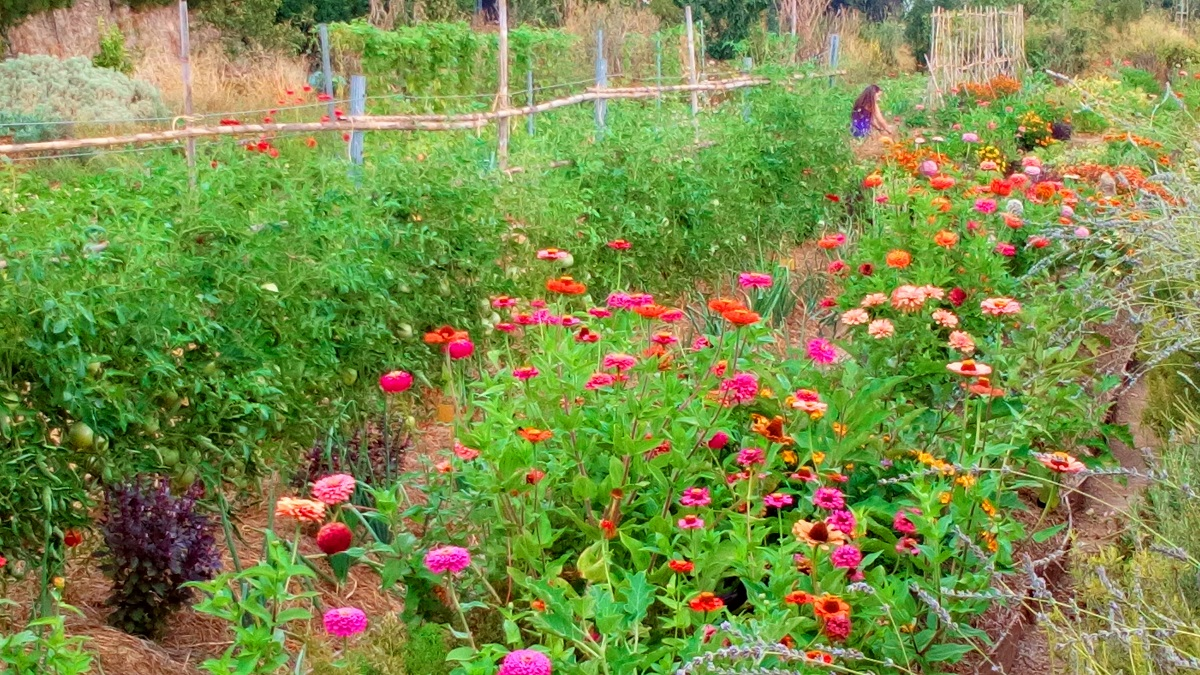 """Para poder dar a conocer la Permacultura en la Comunidad Valenciana, los integrantes de la Asociación """"Huerta-Jardín del Boticario"""" han creado en Macastre un Centro de Vida y Aprendizaje."""